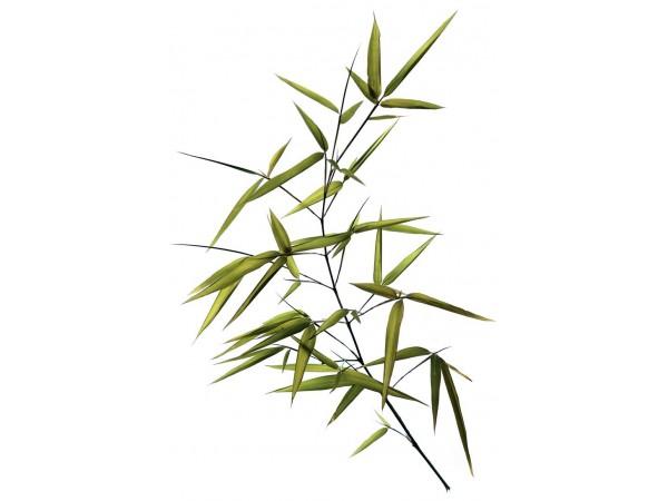 Бамбук, экстракт сухой