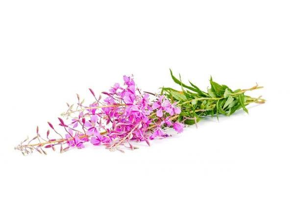 Иван-чай, цветочная вода