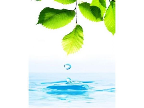 Берёза, цветочная вода