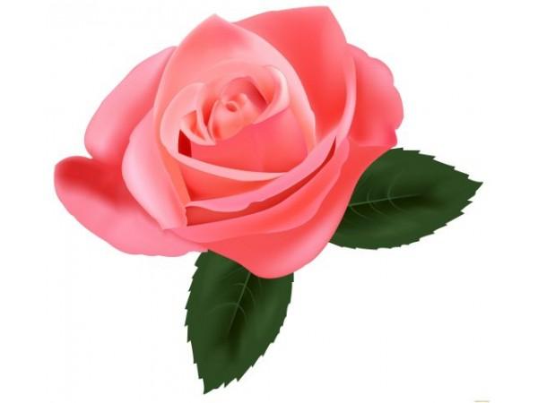 Розовая, цветочная вода