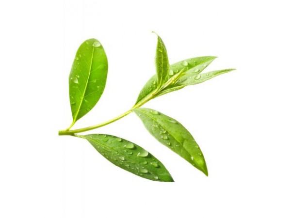 Чайное дерево, цветочная вода