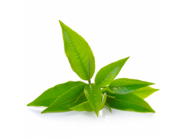 Зелёный чай, цветочная вода