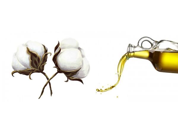 Масло хлопковых семян, Россия